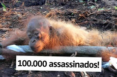 100.000 assassinados!