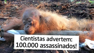 Cientistas advertem: 100.000 assassinados!