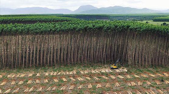 Uma plantação no Brasil para a produção de celulose